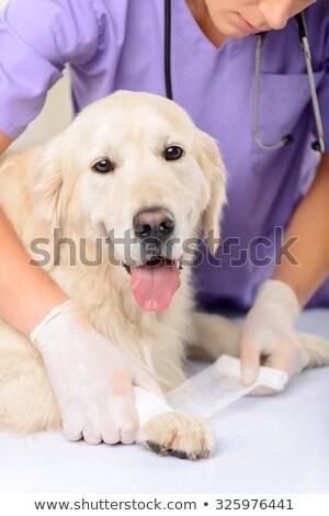 weterynarz · bandaż · psa · medycznych · biuro · kobieta - zdjęcia stock © wavebreak_media