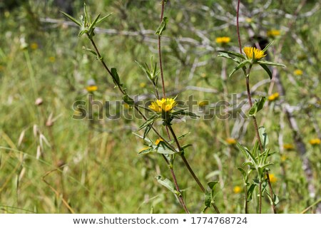 thistle growing on a branch of a summer day Stock photo © artush