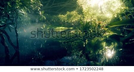 Trópusi erdő folt Rio park legnagyobb Stock fotó © madelaide