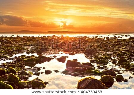 Giallo riflessioni spiaggia selvatico modo Irlanda Foto d'archivio © morrbyte