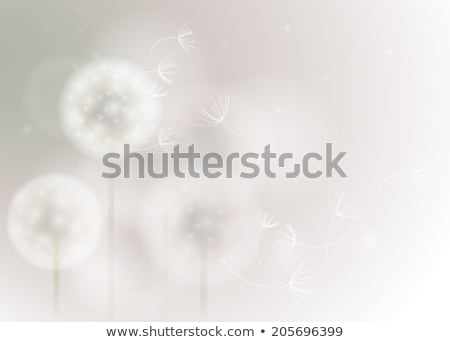 vector illustration of dandelion seeds blown in the wind Stock photo © freesoulproduction