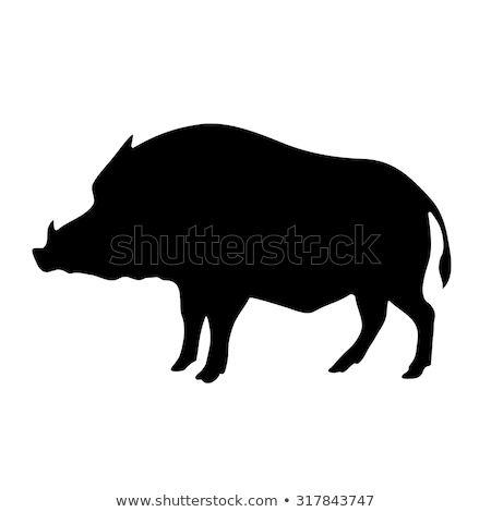 silhouette of the wild boar isolated on white background stock photo © basel101658