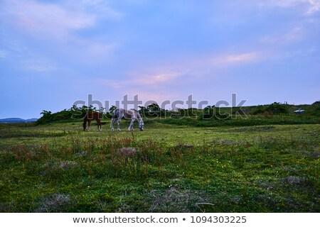 ló · nyáj · központ · figyelem · lovak · fogoly - stock fotó © lincolnrogers