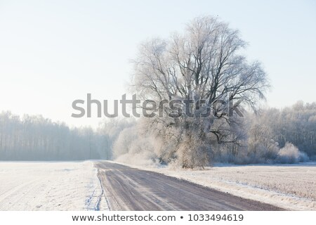 winter road in rural areas at sunset Stock photo © ssuaphoto