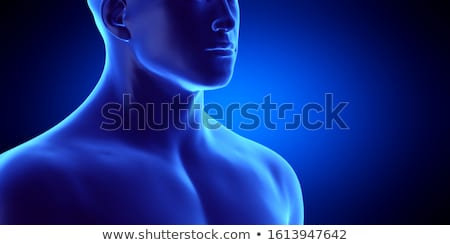 3d rendered of the illustration - human spine stock photo © maya2008