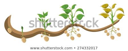 keukentafel · voedsel · tabel · groene · jonge - stockfoto © digifoodstock