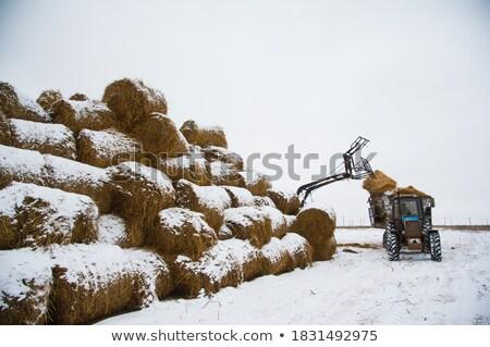 Farm machinery Stock photo © naffarts