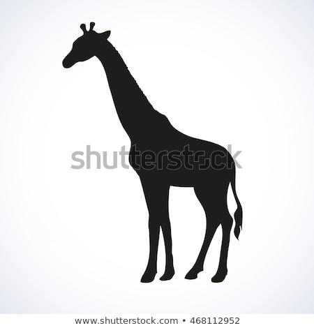 Foto stock: Lado · perfil · girafa · preto · e · branco · parque · céu