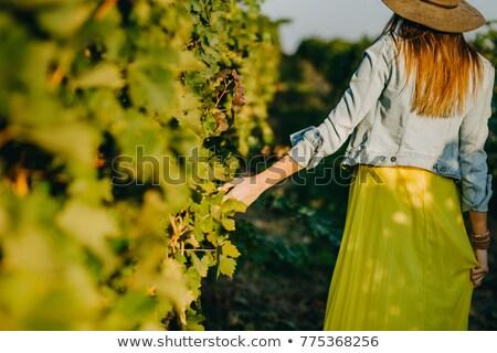 lány · borászat · illusztráció · nő · ital · szőlő - stock fotó © adrenalina