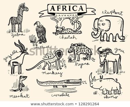 Szó terv állatkert vadállatok illusztráció természet Stock fotó © bluering
