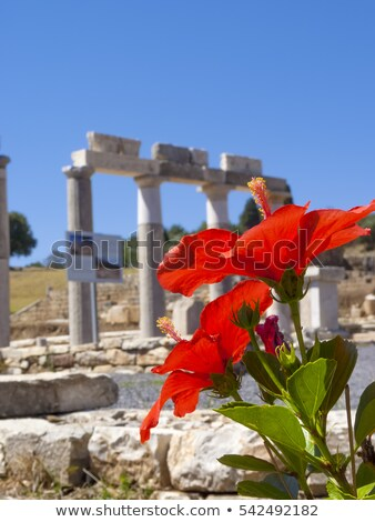 Red flower in front of Temple Ruins at Ancient Messini, Peloponnese, Greece Stock photo © ankarb