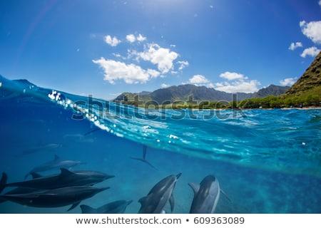 сцена дельфин острове иллюстрация пейзаж морем Сток-фото © bluering