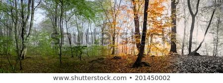 Seizoenen panorama alle jaar ecologisch naadloos Stockfoto © LisaShu