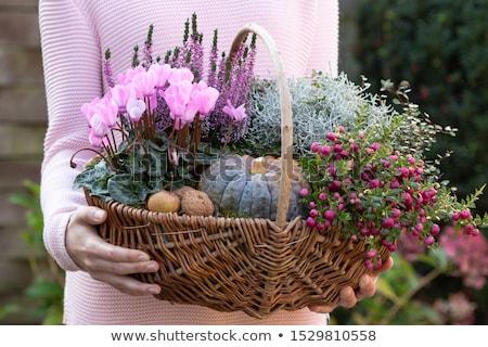 portre · kadın · bitki · pot · çiçek - stok fotoğraf © is2