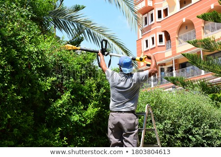 young girl and old man cutting hedge Stock photo © IS2