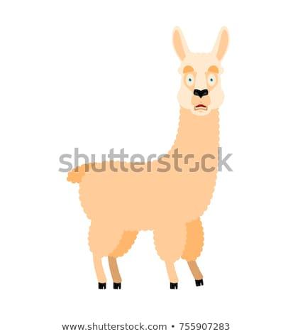 Alpaka bać omg zwierząt mój boga Zdjęcia stock © popaukropa