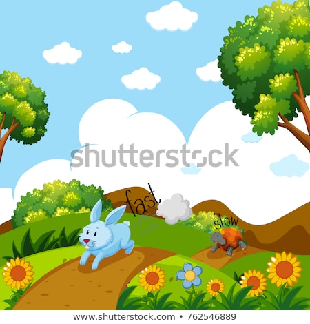 Opposite words for fast and slow with rabbit and turtle running Stock photo © bluering