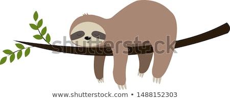 illustratie · cute · cartoon · slaperig · gezicht · permanente - stockfoto © zsooofija