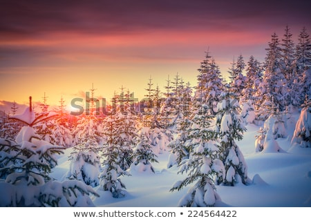winter landscape with footpath in the snow in the mountains stock photo © kotenko