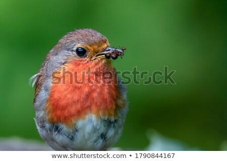 птица · Перу · свет · белый · Буш · природы - Сток-фото © shutter5