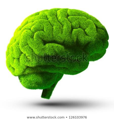 と思います 緑 脳 ベクトル フォーマット 抽象的な ストックフォト © amanmana