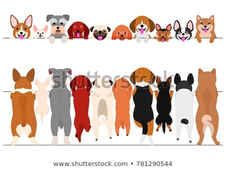 Сток-фото: такса · собака · характер · Cartoon · иллюстрация