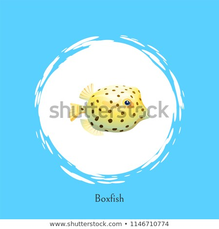 Boxfish Animal Poster Set Vector Illustration Stock photo © robuart