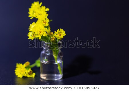 Yellow mimosa and violet flower bouquet on March 8 Stock photo © orensila