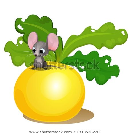 Ripe turnips and a small mouse isolated on white background. Vector cartoon close-up illustration. Stock photo © Lady-Luck