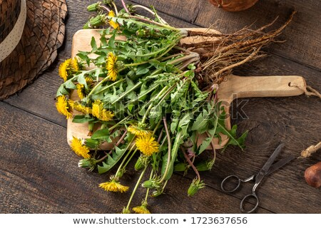 Dandelion plants with roots on a cutting board Stock photo © madeleine_steinbach