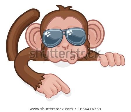 monkey sunglasses cartoon animal pointing at sign stock photo © krisdog