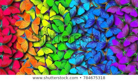 Ontwerp regenboog vlinders brochure realistisch witte Stockfoto © blackmoon979