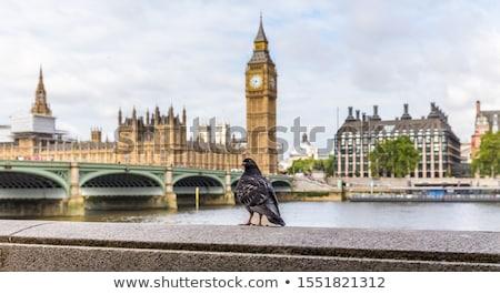 parliament and bridges stock photo © givaga