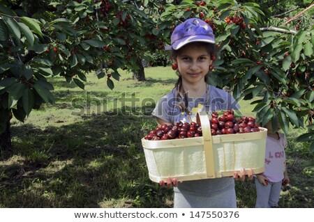 Photo stock: Jeune · femme · fille · cerises · jardin · arbre