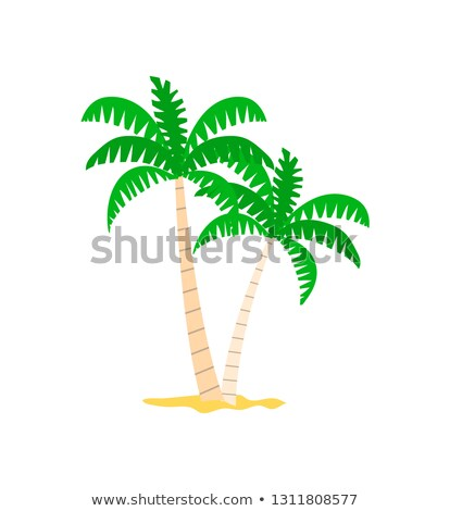 exotic plant palm tree in sand papercard vector stock photo © robuart