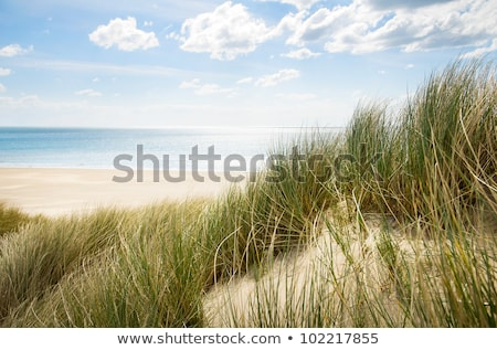 grass at the beach on dune with blue sky Stock photo © meinzahn