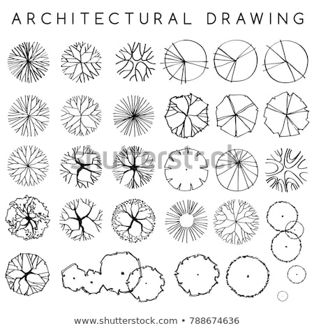 Trees top view for architecture landscape design projects Stock photo © kiddaikiddee