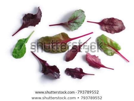 бета листьев Top мнение Сток-фото © maxsol7