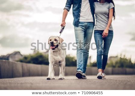 Człowiek kobieta para chodzić psa ulicy miasta Zdjęcia stock © robuart