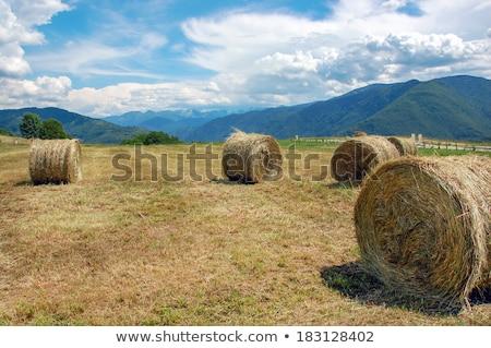 Búzamező aratás tekert szalmaszál naplemente este Stock fotó © simazoran