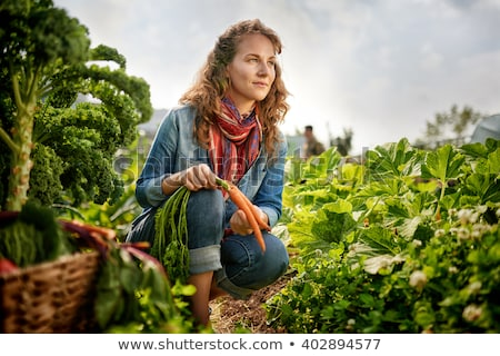 Young kale growing in the vegetable garden. Gardener picking leaves in basket Stock photo © Virgin
