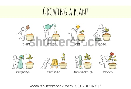 Plant growing at different stages Stock photo © colematt