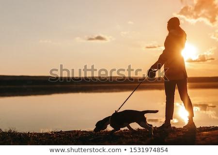 Mulher cão costa bela mulher andar favorito Foto stock © vkstudio