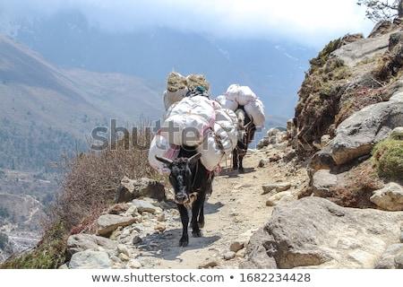 グループ ヒマラヤ山脈 トレッキング ハイキング 登山 旅行 ストックフォト © shai_halud