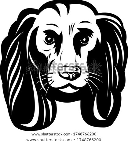 Sad Cocker Spaniel Dog Front View Retro Black and White Stock photo © patrimonio