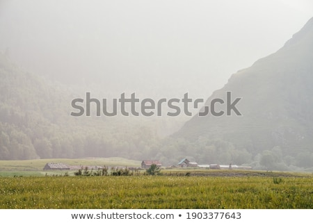 Countryside woods as rural landscape, amazing trees in green forest, nature and environment Stock photo © Anneleven