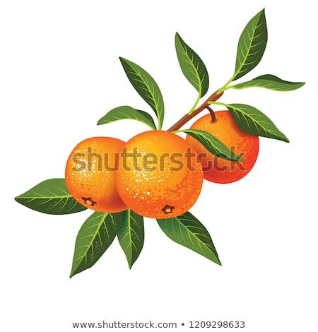 Three tangerines, three Stock photo © RuslanOmega