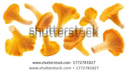 Chanterelles Stock photo © smuki