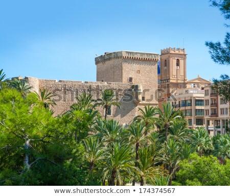Elche Elx Alicante el Palmeral Palm trees Park and Altamira Pala Stock photo © lunamarina