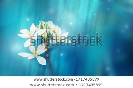 flor · blanca · rocío · gotas · eps · 10 · flor - foto stock © blackmoon979